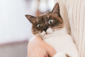 こちらを睨む猫