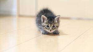身構える子猫