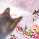 向かい合う猫二匹